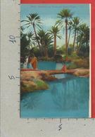 CARTOLINA NV ALGERIA - SCENES ET TYPES 6216 - Groupe De Palmiers Dans L'Oasis - LL - 9 X 14 - Scene & Tipi