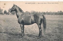 Cpa 78 Haras De La Mare étalon St Damien - Francia
