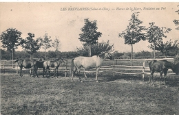 Cpa 78 Haras De La Mare Poulains Au Pré - Francia
