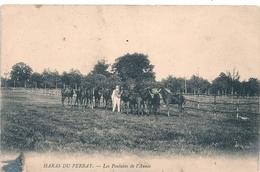 Cpa 78 Haras Du Perray Poulains De L'année - Francia