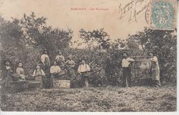 MARCIGNY - Les Vendanges - Autres Communes