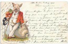 Cochon En Position Humaine - Pigs