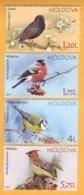 2015 Moldova Moldavie Moldau Birds From Moldovan Regions Mint - Specht- & Bartvögel
