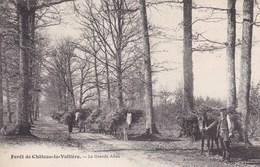 Indre-et-Loire - Forêt De Château-la-Vallière - La Grande Allée - Francia
