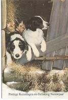 AN 770 , MODERN FANTASY FOLDING CARD  , GREETINGS , FINE ART  , DOGS - Chiens