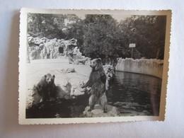 Photo Photos Photographie Zoo De Vincennes Ours - Photos