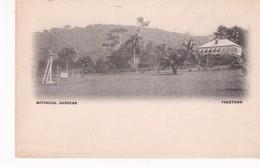 SIERRA LEONE(FREETOWN) ARBRE - Sierra Leone