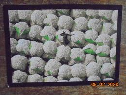 Ballots De Coton, Thonakaha, Korhogo, Cote D'Ivoire. Yann Arthus Bertrand. 20 X 14 Cm - Côte-d'Ivoire