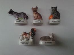 Lot De 5 Fèves Chats : Chartreux - Persans Bicolores - Abyssin - Européen - Angora - Animals