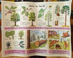 Affiche Scolaire-MDI–Oberthur–Tableau Recto N°45:DANS LA FORET/Tableau Verso N°46: LE POIS. - Posters