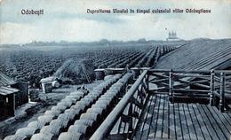 ODOBESTI / VRANCEA : DEPOZITAREA VINULUI - CULESUL VIILOR ODOBESTIANU / VENDANGE / VINTAGE - ANNÉE / YEAR : 1929 (ad916) - Romania