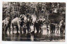 Sri Lanka --Ceylan -- 1950 -- Near KANDY --Temple Elephants At Katugastota River (très Animée) .timbre Cacher.. à Saisir - Sri Lanka (Ceylon) (1948-...)