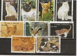 CHATS DU MONDE - Domestic Cats