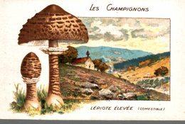 CHROMO CHICOREE WILLIOT  LES CHAMPIGNONS  LEPIOTE ELEVEE  COMESTIBLE - Cromos