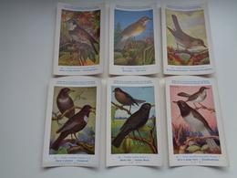 Beau Lot De 9 Cartes Postales Oiseaux  Oiseau  Illustrateur H.Dupond     Mooi Lot Van 9 Postkaarten Van Vogels  Vogel - Postkaarten