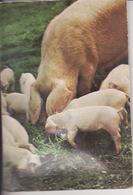 Fantaisie, Système, Musicale, Pouet Pouet, Cochon, Pig, édition JLP , 2 Scans - Cartoline Con Meccanismi