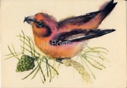 Red Crossbill - Loxia Curvirostra - Birds - Illustration By E. Pikk - 1975 - Estonia USSR - Unused - Oiseaux