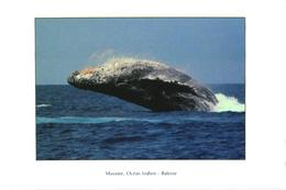Mayotte, Whale - Other