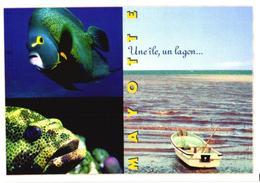 Mayotte, Fishes - Fish & Shellfish