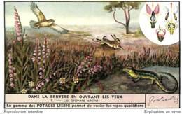 6 Chromos - Liebig - Dans La Bruyère En Ouvrant Les Yeux - Liebig