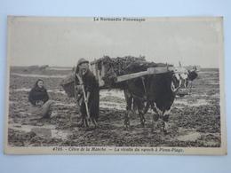 FRANCE-MANCHE-50-COTES DE LA MANCHE-LA RECOLTE DU VARECH 0 PIROU PLAGE - Other Municipalities