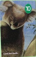 NAURU  -  Card  -  FAKE  -  Koala  -   $10 - Nauru