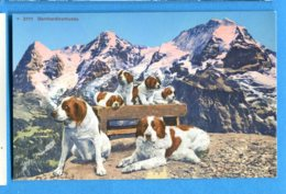 OLI519, Chien Grand Saint-Bernard, Bernhardinerhunde, San Bernardino, 3111, Non Circulée - Hunde