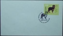 Portugal - Maximum Cover 1981 Dog 8$50 Solo Consonant Cancel Évora - Covers & Documents