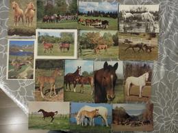 LOT   DE 56    CARTES  POSTALES    DE  CHEVAUX - Cartes Postales