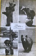 (3055) Berne - La Fossse Aux Ours - 1956 - BE Berne
