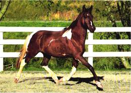 Running Horse - Cavalli