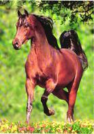 Walking Brown Horse - Cavalli