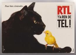 PUB - RTL Y'A RIEN DE TEL - Chat - Canari - Photo H. NABON - Publicité