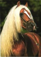Brown Horse - Cavalli