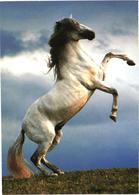 White Horse - Cavalli