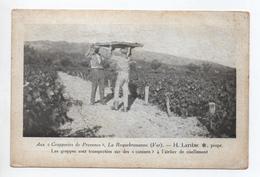 LA ROQUEBRUSSANNE (83) - AUX GRAPPERIES DE PROVENCE H. LATIERE - LES GRAPPES SONT TRANSPORTEES SUR DES CANISSES - La Roquebrussanne