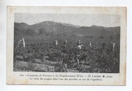 LA ROQUEBRUSSANNE (83) - AUX GRAPPERIES DE PROVENCE H. LATIERE - LE CHOIX DES GRAPPES DANS L'NE DES PARCELLES - La Roquebrussanne