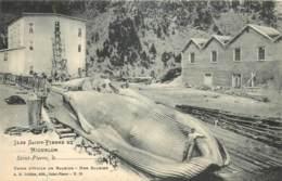 France - Saint-Pierre Et Miquelon - St.-Pierre - Usine D' Huile De Baleine - Une Baleine - Saint-Pierre-et-Miquelon