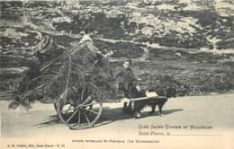 France - Saint-Pierre Et Miquelon - St.-Pierre - Autre Attelage St.-Pierrais ( Le Terreneuve ) - Saint-Pierre-et-Miquelon