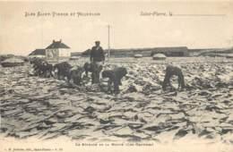 France - Saint-Pierre Et Miquelon - St.-Pierre - Le Séchage De La Morue ( Les Graviers ) - Saint-Pierre-et-Miquelon