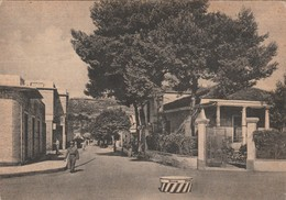 TORTORETO LIDO - VIALE SIRENA - Teramo