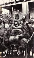 877/ A.E.F. La Mort Du Gorille, 1953, Zegel Van Cameroun - Andere