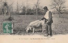CPA - Le Truffier - La Recherche Des Truffes En Périgord - Paysans