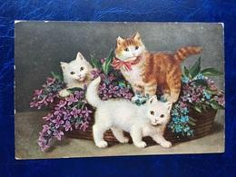 """Cpa---""""Chats Jouant Autour Et Dans Un Panier De Fleurs --(924) - Cats"""