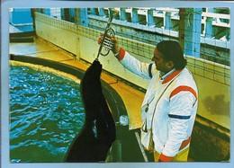 Ermenonville (60) Zoo Jean-Richard Les Otaries Dressées Par Jo Clavel 2scans 15-07-1979 Trompette - Ermenonville