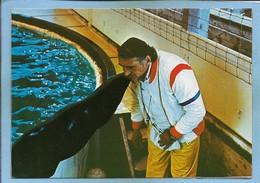 Ermenonville (60) Zoo Jean-Richard Les Otaries Dressées Par Jo Clavel 2scans 15-07-1979 - Ermenonville