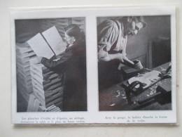 MIRECOURT (LUTHERIE Violon)   - Luthier Et Ebauchage De Planche  - Coupure De Presse De 1936 - Strumenti Musicali