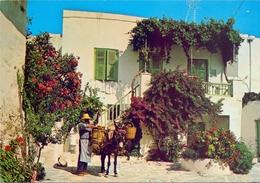 GRECE  PAROS CHARACTERISTIC YARD POST CARD  (FEB20834) - Grecia