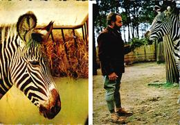 """Carte 1960 JACQUES BOUILLAULT : Parc Zoologique  - Zèbre De Grevy """"Caroline"""" - La Fleche"""