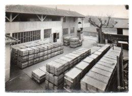 GF (71) 477, Burgy, Combier, Pépinières Letourneau, Mars 1962, Un Lot De Greffés Prêt à être Placé En Chambre De Stratif - France